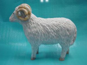 C14.bárány-kecske