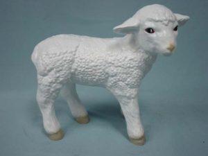 C78.bárány-kecske