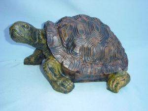 C320.teknősbéka