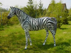 C403.zebra