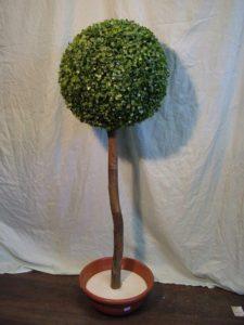 3154.Buxus műfa